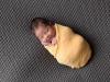 newborn_0117