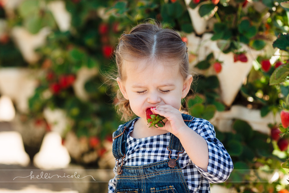 strawberry picking, blessington farms, houston, strawberries, farms, farm pictures, strawberry photoshoot, family, mom and me, mommy and me, mom and daughter, toddler, two years old, overalls, color, eating strawberries, kelli nicole photography, houston family photographer, houston family photography, hydroponic strawberries